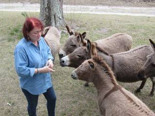 Lenore feeding donkeys